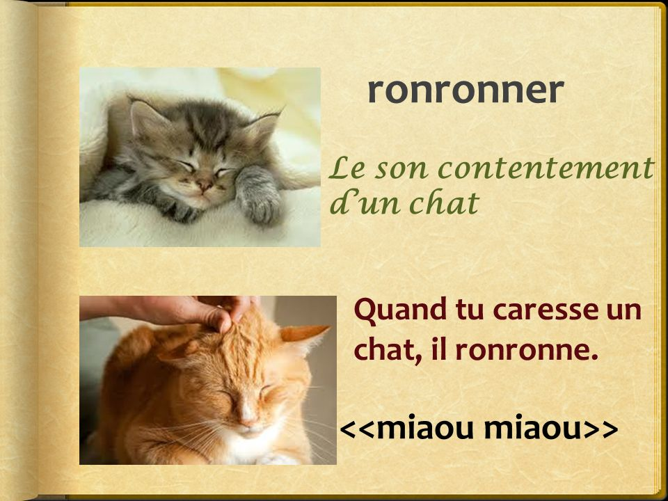ronronner > Quand tu caresse un chat, il ronronne. Le son contentement dun chat