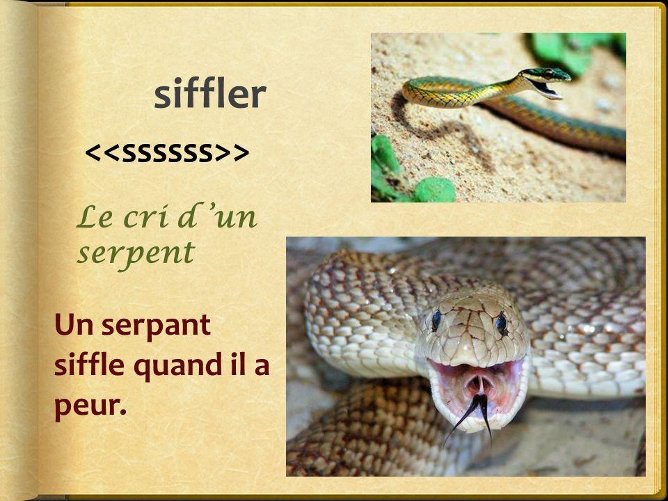 siffler > Un serpant siffle quand il a peur. Le cri d un serpent