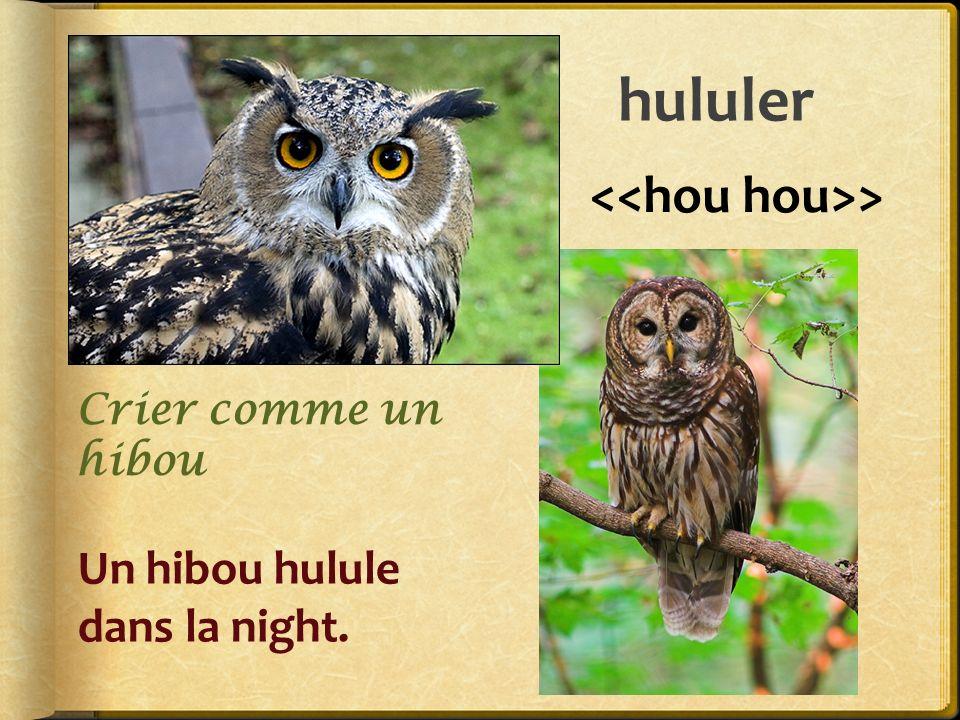 hululer > Un hibou hulule dans la night. Crier comme un hibou