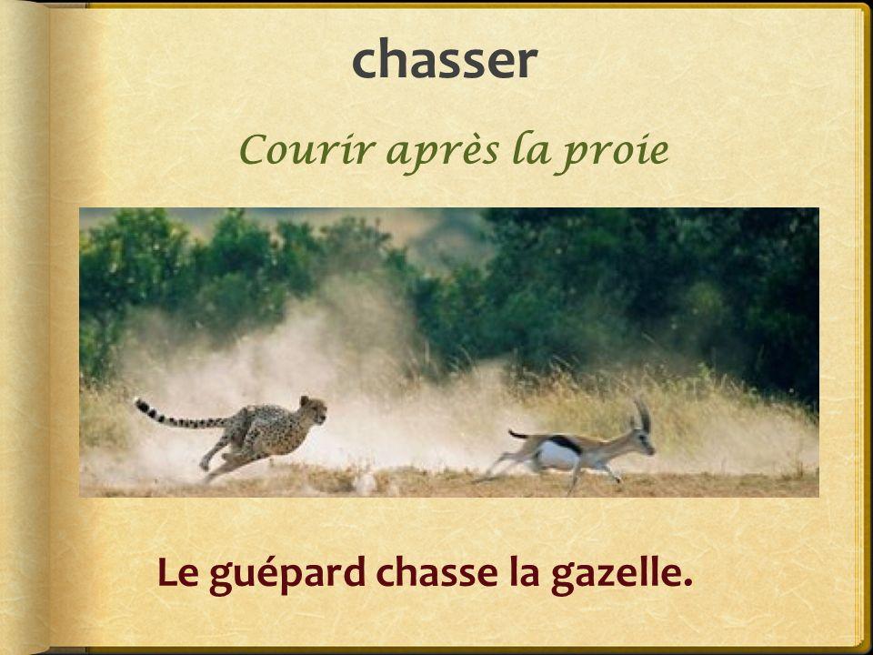 chasser Le guépard chasse la gazelle. Courir après la proie