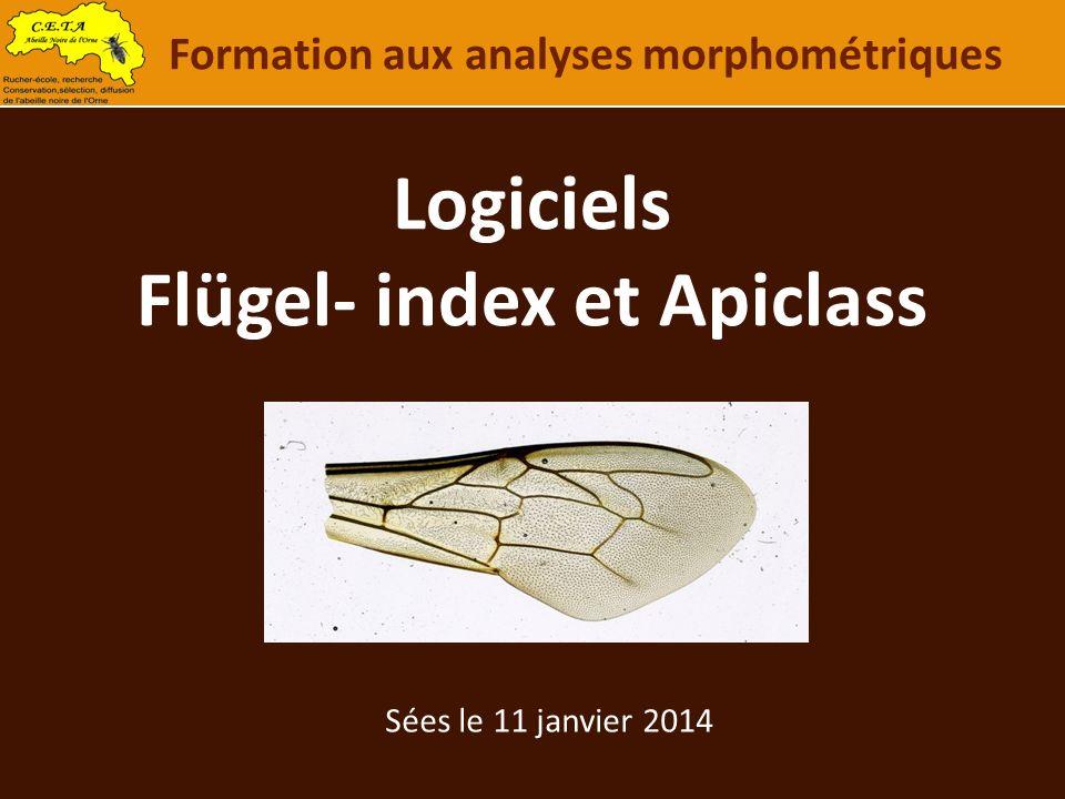 Logiciels Flügel- index et Apiclass Formation aux analyses morphométriques Sées le 11 janvier 2014