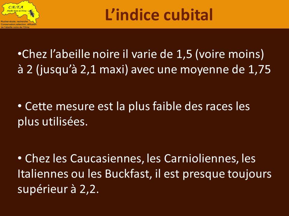 Chez labeille noire il varie de 1,5 (voire moins) à 2 (jusquà 2,1 maxi) avec une moyenne de 1,75 Cette mesure est la plus faible des races les plus ut