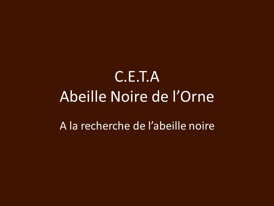 C.E.T.A Abeille Noire de lOrne A la recherche de labeille noire