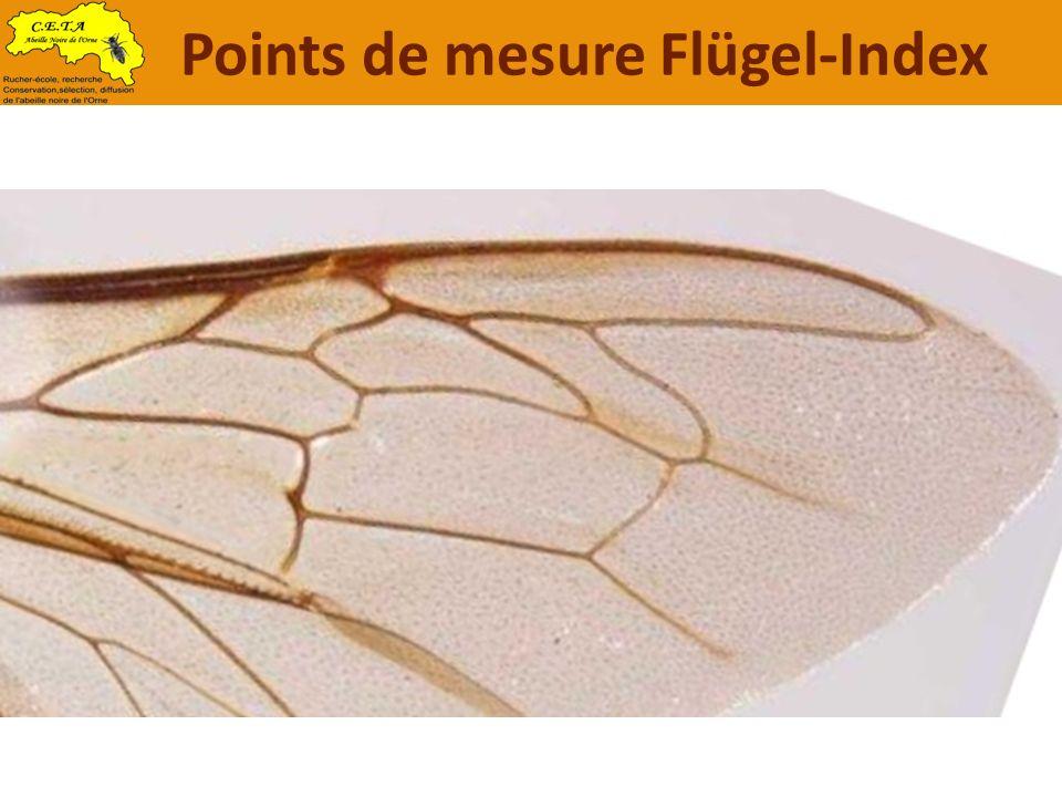 Points de mesure Flügel-Index