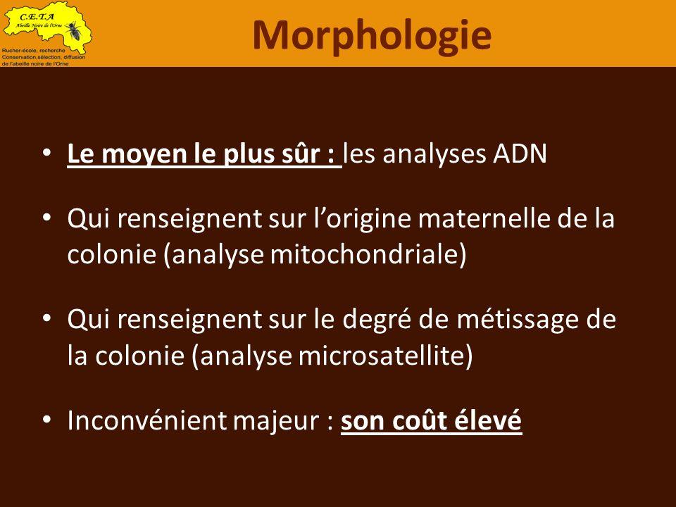 Le moyen le plus sûr : les analyses ADN Qui renseignent sur lorigine maternelle de la colonie (analyse mitochondriale) Qui renseignent sur le degré de