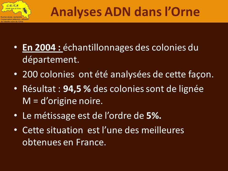 En 2004 : échantillonnages des colonies du département. 200 colonies ont été analysées de cette façon. Résultat : 94,5 % des colonies sont de lignée M