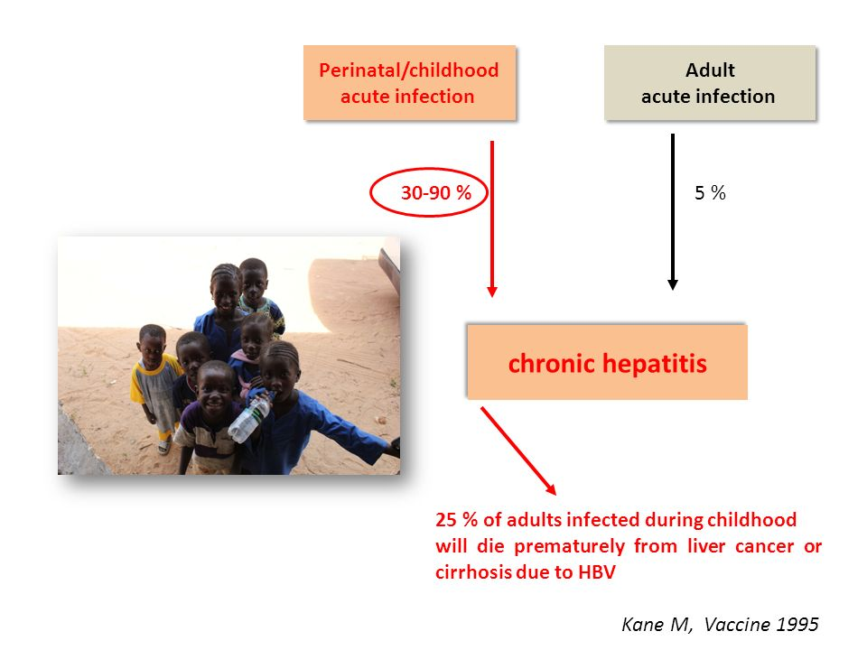 Perinatal/childhood acute infection Perinatal/childhood acute infection chronic hepatitis Adult acute infection Adult acute infection 5 %30-90 % 25 % of adults infected during childhood will die prematurely from liver cancer or cirrhosis due to HBV Kane M, Vaccine 1995