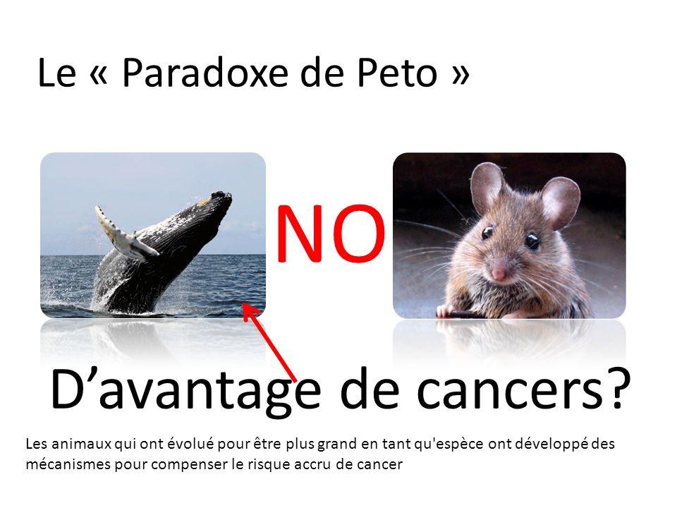 Le « Paradoxe de Peto » Davantage de cancers? NO Les animaux qui ont évolué pour être plus grand en tant qu'espèce ont développé des mécanismes pour c