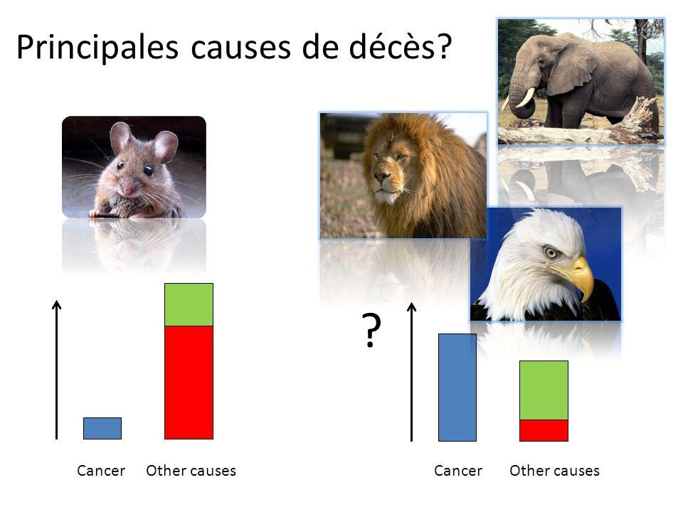 Cancer Principales causes de décès? Other causesCancerOther causes ?