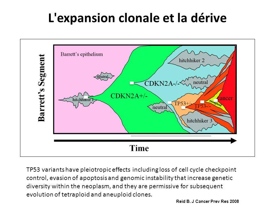 Reid B. J Cancer Prev Res 2008 L'expansion clonale et la dérive TP53 variants have pleiotropic effects including loss of cell cycle checkpoint control