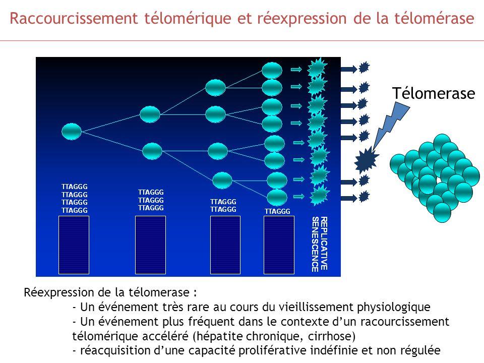 Raccourcissement télomérique et réexpression de la télomérase Télomerase Réexpression de la télomerase : - Un événement très rare au cours du vieillis