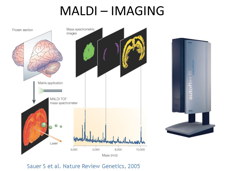 MALDI – IMAGING Sauer S et al. Nature Review Genetics, 2005