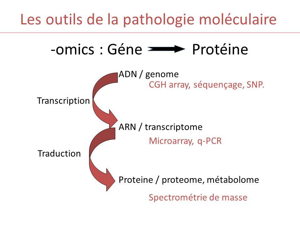 Les outils de la pathologie moléculaire -omics : Géne Protéine ADN / genome Transcription ARN / transcriptome Traduction Proteine / proteome, métabolo
