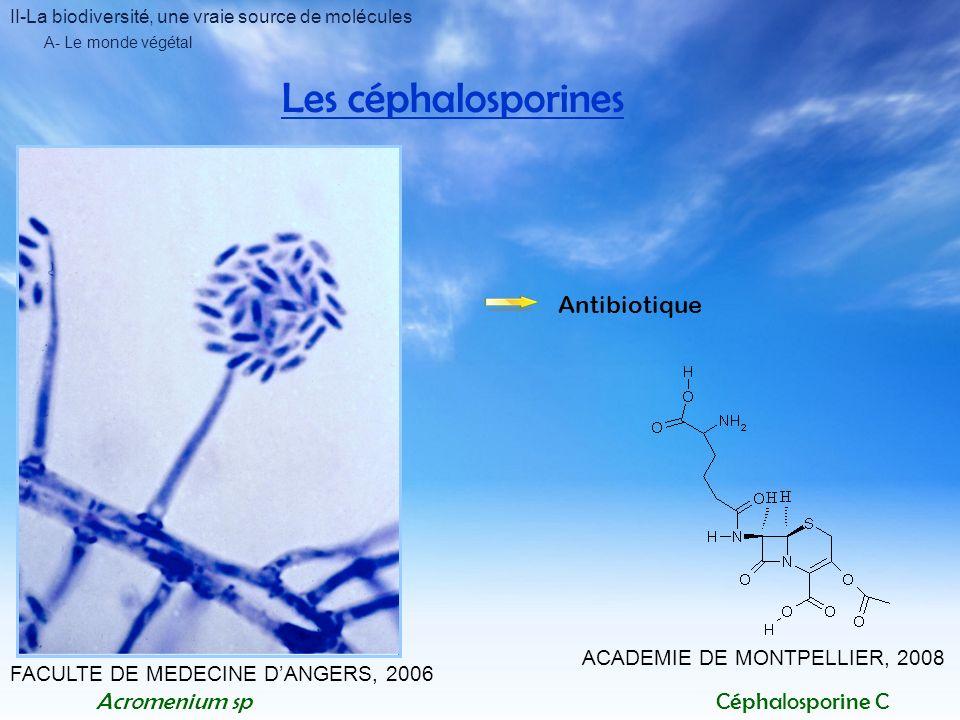 II-La biodiversité, une vraie source de molécules A- Le monde végétal Les céphalosporines FACULTE DE MEDECINE DANGERS, 2006 Acromenium spCéphalosporin