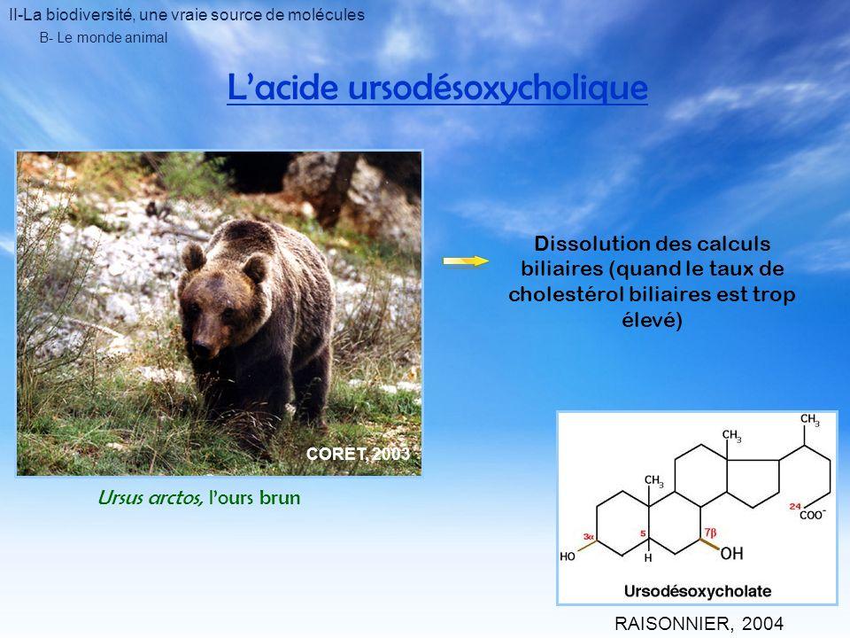II-La biodiversité, une vraie source de molécules B- Le monde animal Lacide ursodésoxycholique Ursus arctos, lours brun BAILLY, 2001 Dissolution des calculs biliaires (quand le taux de cholestérol biliaires est trop élevé) RAISONNIER, 2004 CORET, 2003