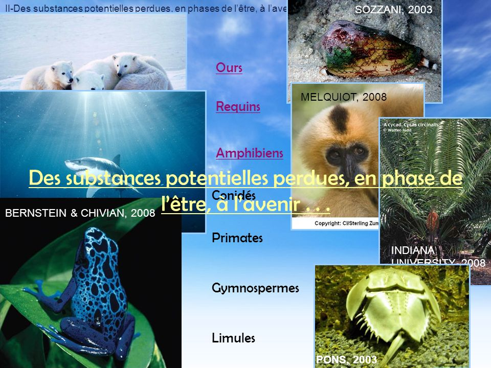 II-Des substances potentielles perdues, en phases de lêtre, à lavenir Amphibiens Ours Conidés Limules Primates Gymnospermes ACADEMIE DE GRENOBLE, 2007 INDIANA UNIVERSITY, 2008 SOZZANI, 2003 MELQUIOT, 2008 Requins BLOCK & KIMLEY, 2005BERNSTEIN & CHIVIAN, 2008 PONS, 2003 Des substances potentielles perdues, en phase de lêtre, à lavenir...