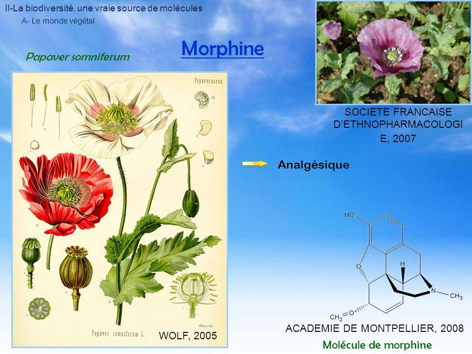 II-La biodiversité, une vraie source de molécules A- Le monde végétal Morphine ACADEMIE DE MONTPELLIER, 2008 Molécule de morphine Papaver somniferum WOLF, 2005 SOCIETE FRANCAISE DETHNOPHARMACOLOGI E, 2007 Analgésique