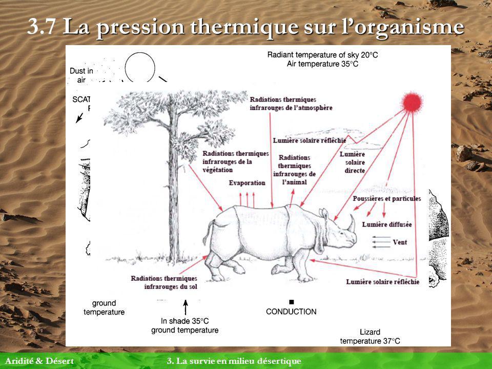 La pression thermique sur lorganisme 3.7 La pression thermique sur lorganisme Aridité & Désert 3. La survie en milieu désertique