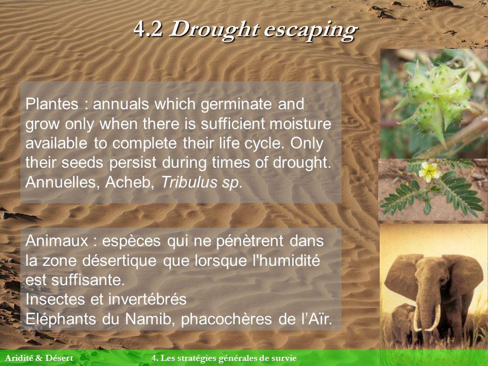 4.2 Drought escaping Animaux : espèces qui ne pénètrent dans la zone désertique que lorsque l'humidité est suffisante. Insectes et invertébrés Eléphan