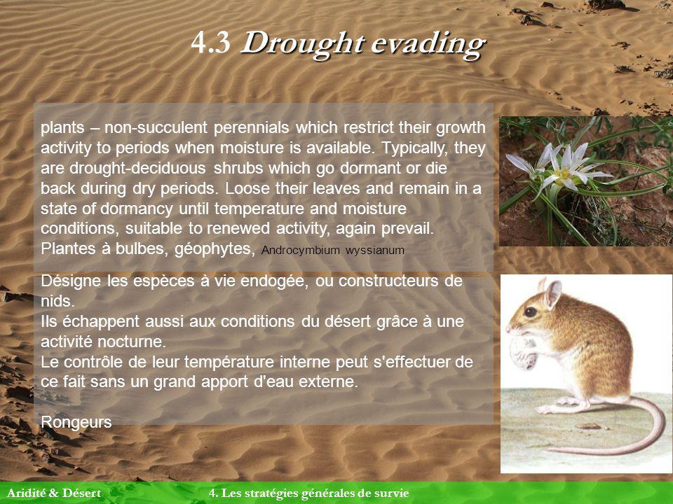 Drought evading 4.3 Drought evading Désigne les espèces à vie endogée, ou constructeurs de nids. Ils échappent aussi aux conditions du désert grâce à