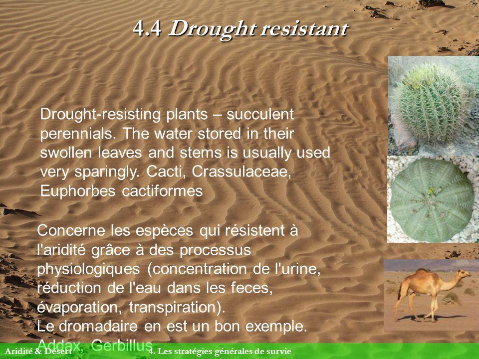 4.4 Drought resistant Concerne les espèces qui résistent à l'aridité grâce à des processus physiologiques (concentration de l'urine, réduction de l'ea