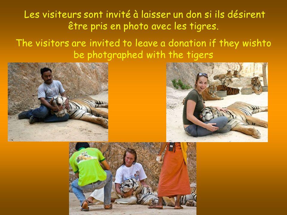 Les visiteurs sont invité à laisser un don si ils désirent être pris en photo avec les tigres.