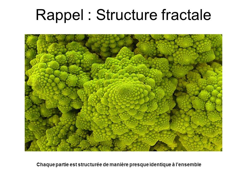 Rappel : Structure fractale Chaque partie est structurée de manière presque identique à lensemble