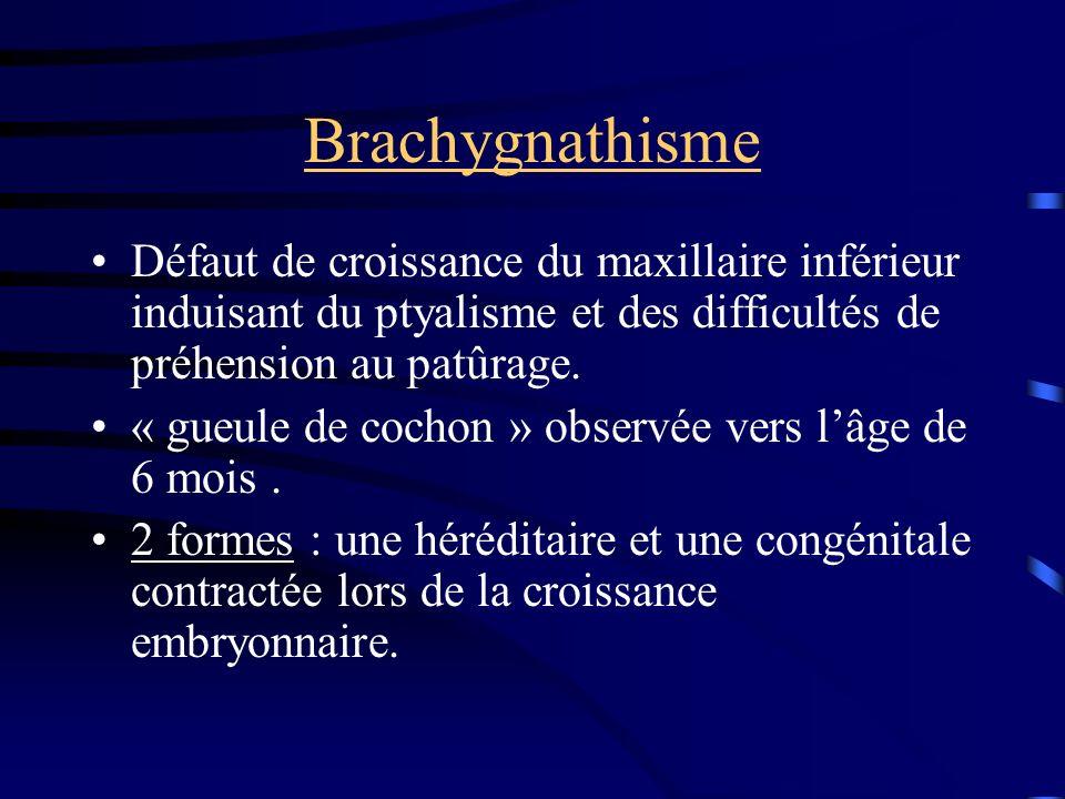Brachygnathisme Défaut de croissance du maxillaire inférieur induisant du ptyalisme et des difficultés de préhension au patûrage. « gueule de cochon »