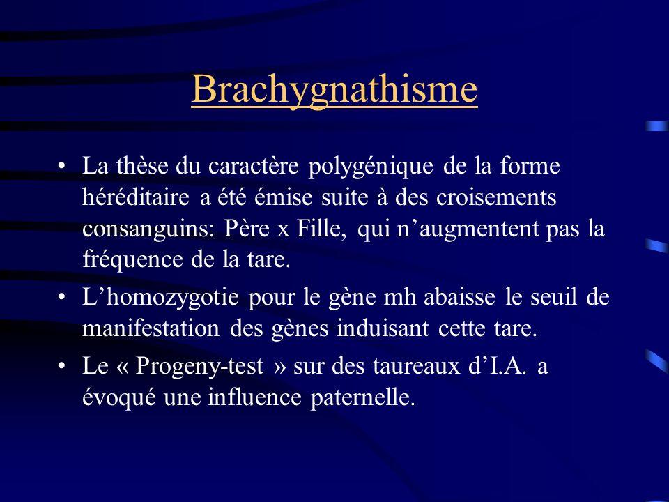 Brachygnathisme La thèse du caractère polygénique de la forme héréditaire a été émise suite à des croisements consanguins: Père x Fille, qui naugmente