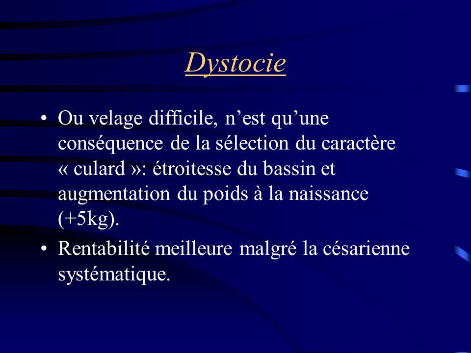 Dystocie Ou velage difficile, nest quune conséquence de la sélection du caractère « culard »: étroitesse du bassin et augmentation du poids à la naissance (+5kg).