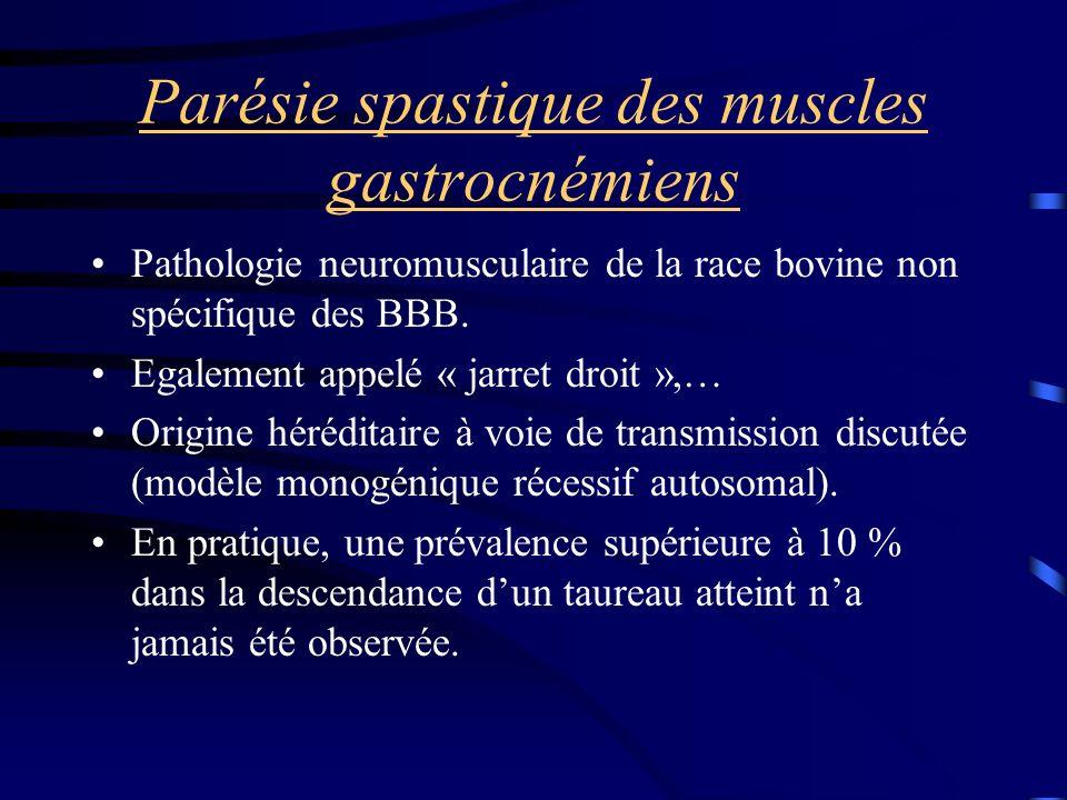 Parésie spastique des muscles gastrocnémiens Pathologie neuromusculaire de la race bovine non spécifique des BBB.