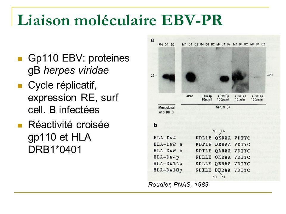 Autres projets Angiogénèse et SpA: VEGF SpA vs T (Clin Exp Immunol, 2003) Tolérance orale extraits bactériens E.Coli (hsp 60) induction population cellulaire T reg (IL-10 ) Inflammation et os Rhum Inflam: marqueurs remodelage osseux (Rheumatology, 1998, 1999, 2001, 2005), leptine et adipocytokines, OPG / RANK ligand.