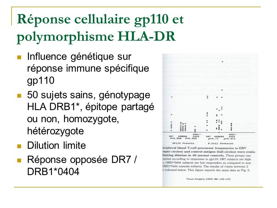 Réponse cellulaire gp110 et polymorphisme HLA-DR Influence génétique sur réponse immune spécifique gp110 50 sujets sains, génotypage HLA DRB1*, épitope partagé ou non, homozygote, hétérozygote Dilution limite Réponse opposée DR7 / DRB1*0404
