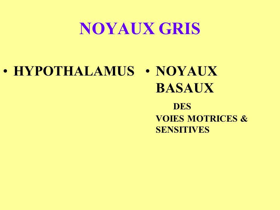 NOYAUX GRIS HYPOTHALAMUSNOYAUX BASAUX DES VOIES MOTRICES & SENSITIVES