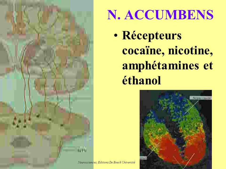 N. ACCUMBENS Récepteurs cocaïne, nicotine, amphétamines et éthanol Neurosciences, Editions De Boeck Université