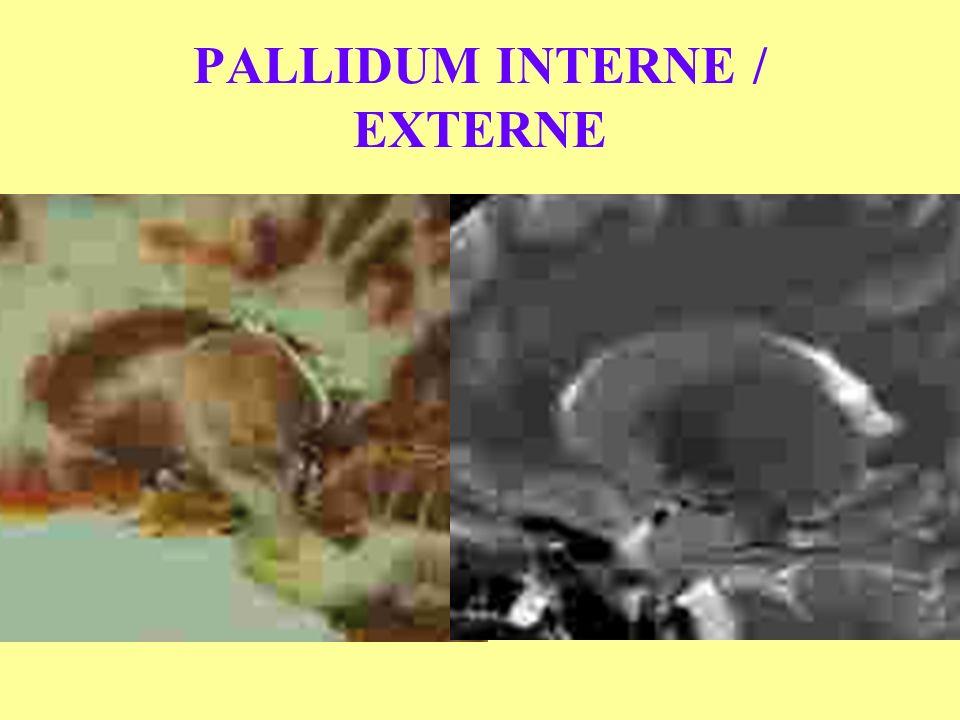 PALLIDUM INTERNE / EXTERNE