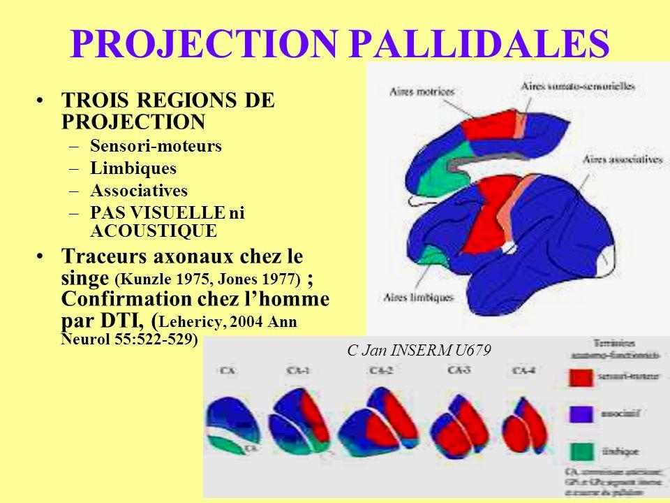 PROJECTION PALLIDALES TROIS REGIONS DE PROJECTION –Sensori-moteurs –Limbiques –Associatives –PAS VISUELLE ni ACOUSTIQUE Traceurs axonaux chez le singe