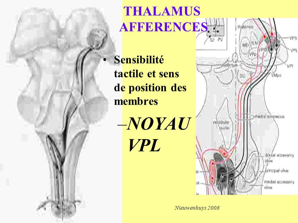 Sensibilité tactile et sens de position des membres –NOYAU VPL Nieuwenhuys 2008 THALAMUS AFFERENCES