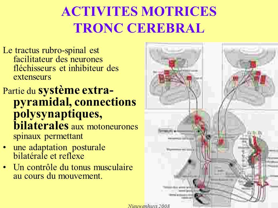 ACTIVITES MOTRICES TRONC CEREBRAL Le tractus rubro-spinal est facilitateur des neurones fléchisseurs et inhibiteur des extenseurs Partie du système ex