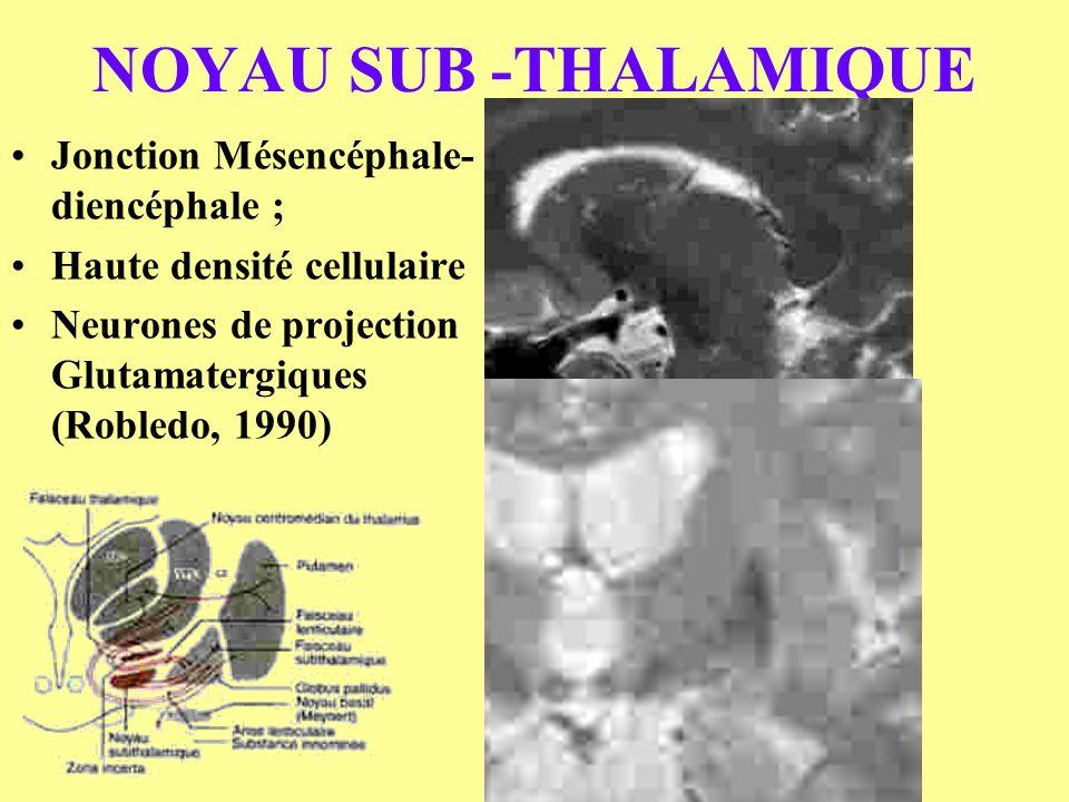NOYAU SUB -THALAMIQUE Jonction Mésencéphale- diencéphale ; Haute densité cellulaire Neurones de projection Glutamatergiques (Robledo, 1990)