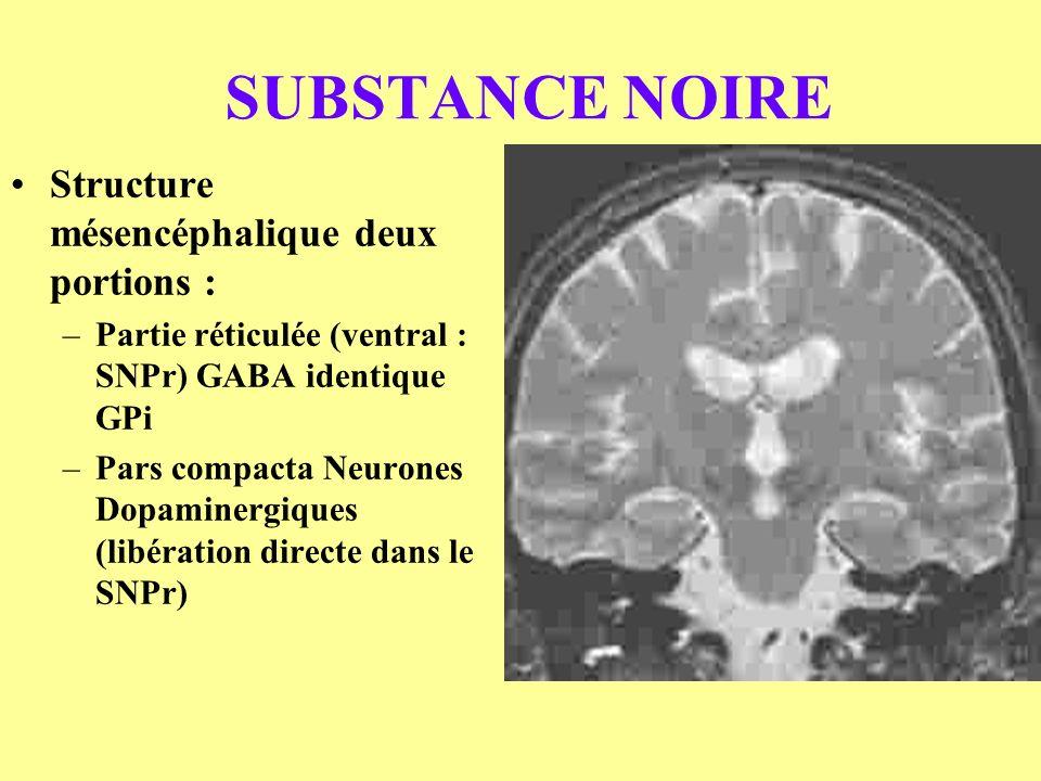 SUBSTANCE NOIRE Structure mésencéphalique deux portions : –Partie réticulée (ventral : SNPr) GABA identique GPi –Pars compacta Neurones Dopaminergique