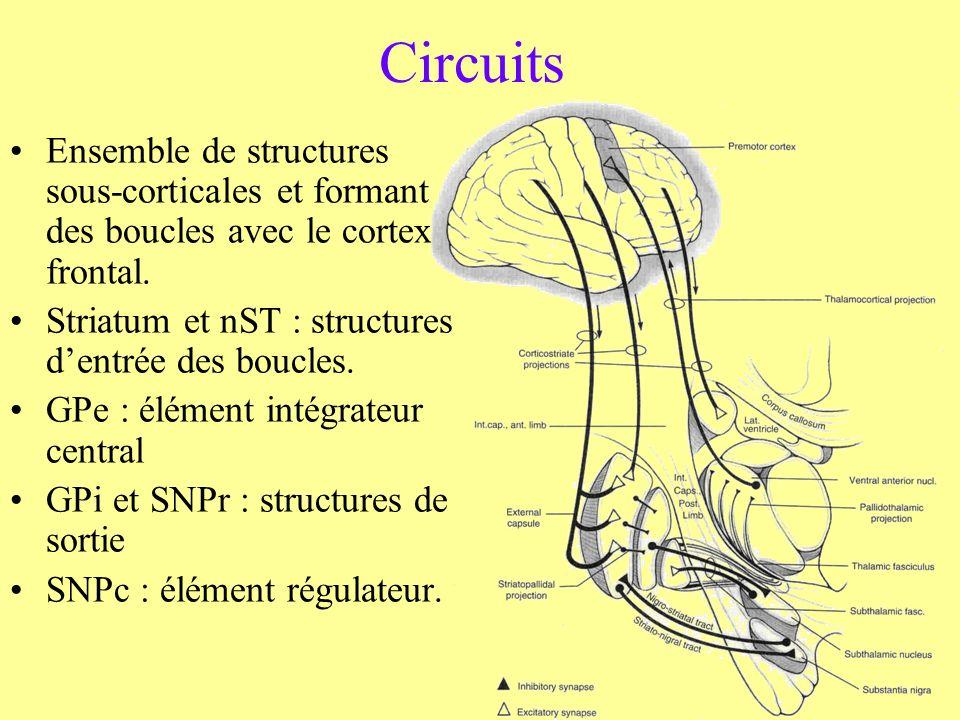 Circuits Ensemble de structures sous-corticales et formant des boucles avec le cortex frontal. Striatum et nST : structures dentrée des boucles. GPe :
