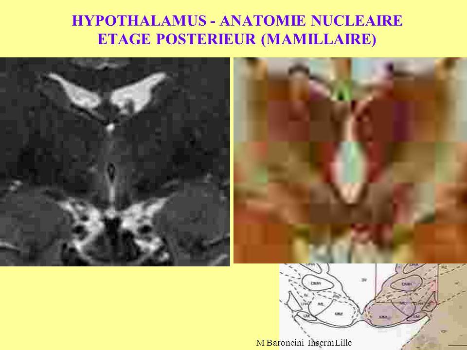 HYPOTHALAMUS - ANATOMIE NUCLEAIRE ETAGE POSTERIEUR (MAMILLAIRE) M Baroncini Inserm Lille