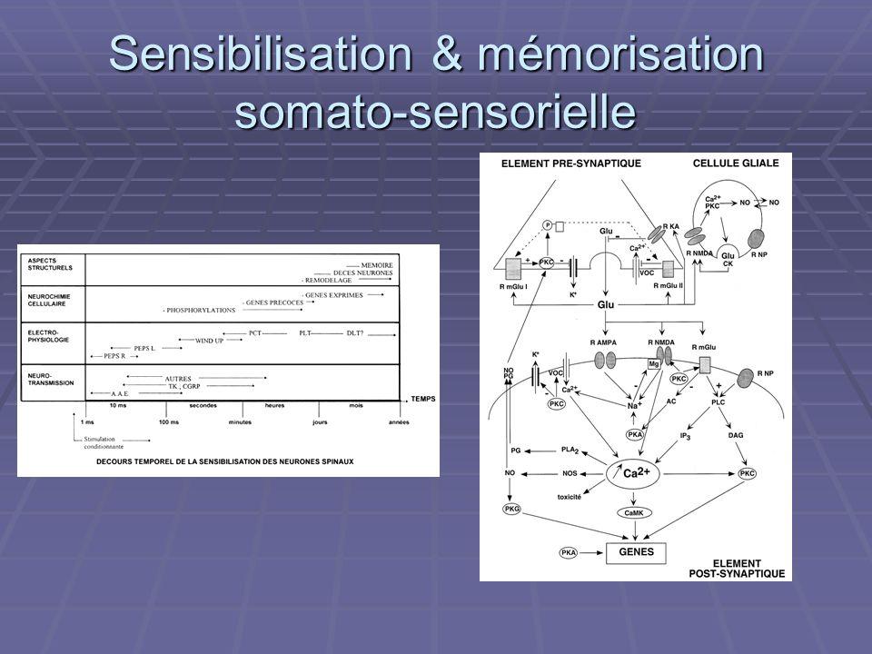 Sensibilisation & mémorisation somato-sensorielle