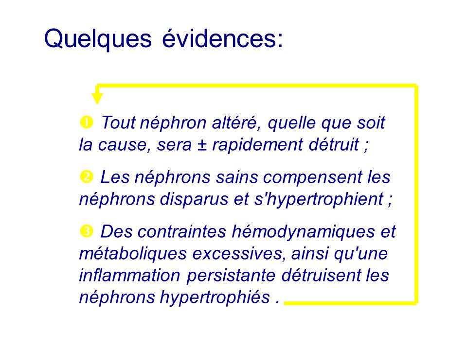 Tout néphron altéré, quelle que soit la cause, sera ± rapidement détruit ; Les néphrons sains compensent les néphrons disparus et s'hypertrophient ; D