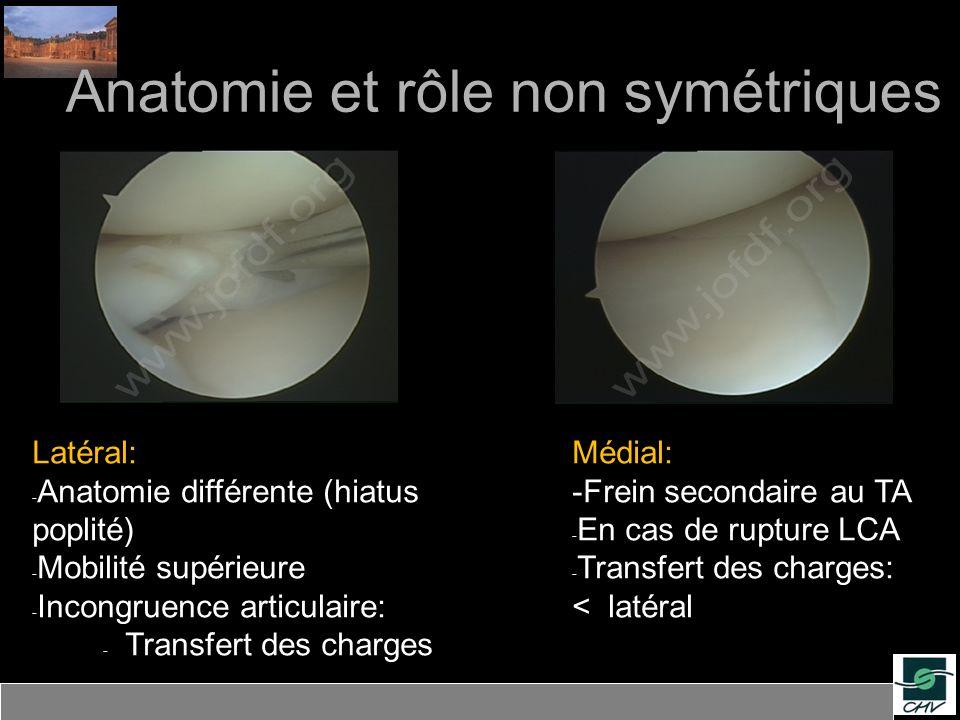Anatomie et rôle non symétriques Latéral: - Anatomie différente (hiatus poplité) - Mobilité supérieure - Incongruence articulaire: - Transfert des cha