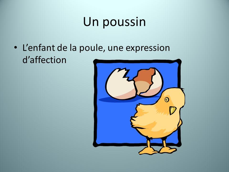 Un poussin Lenfant de la poule, une expression daffection