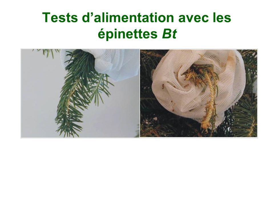 Tests dalimentation avec les épinettes Bt