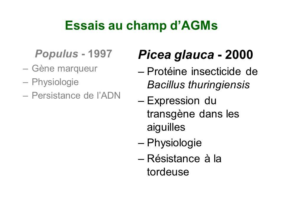 Essais au champ dAGMs Populus - 1997 –Gène marqueur –Physiologie –Persistance de lADN Picea glauca - 2000 –Protéine insecticide de Bacillus thuringien