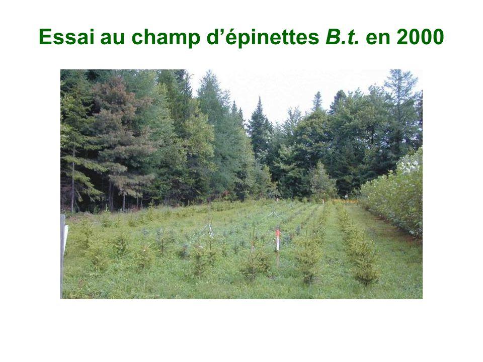 Essai au champ dépinettes B.t. en 2000